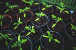 Photo de pots de plantes